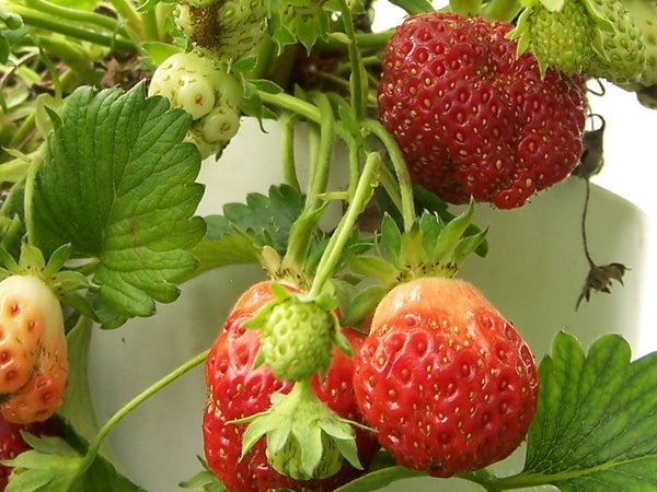 How to Build Your Own Strawberry Tower