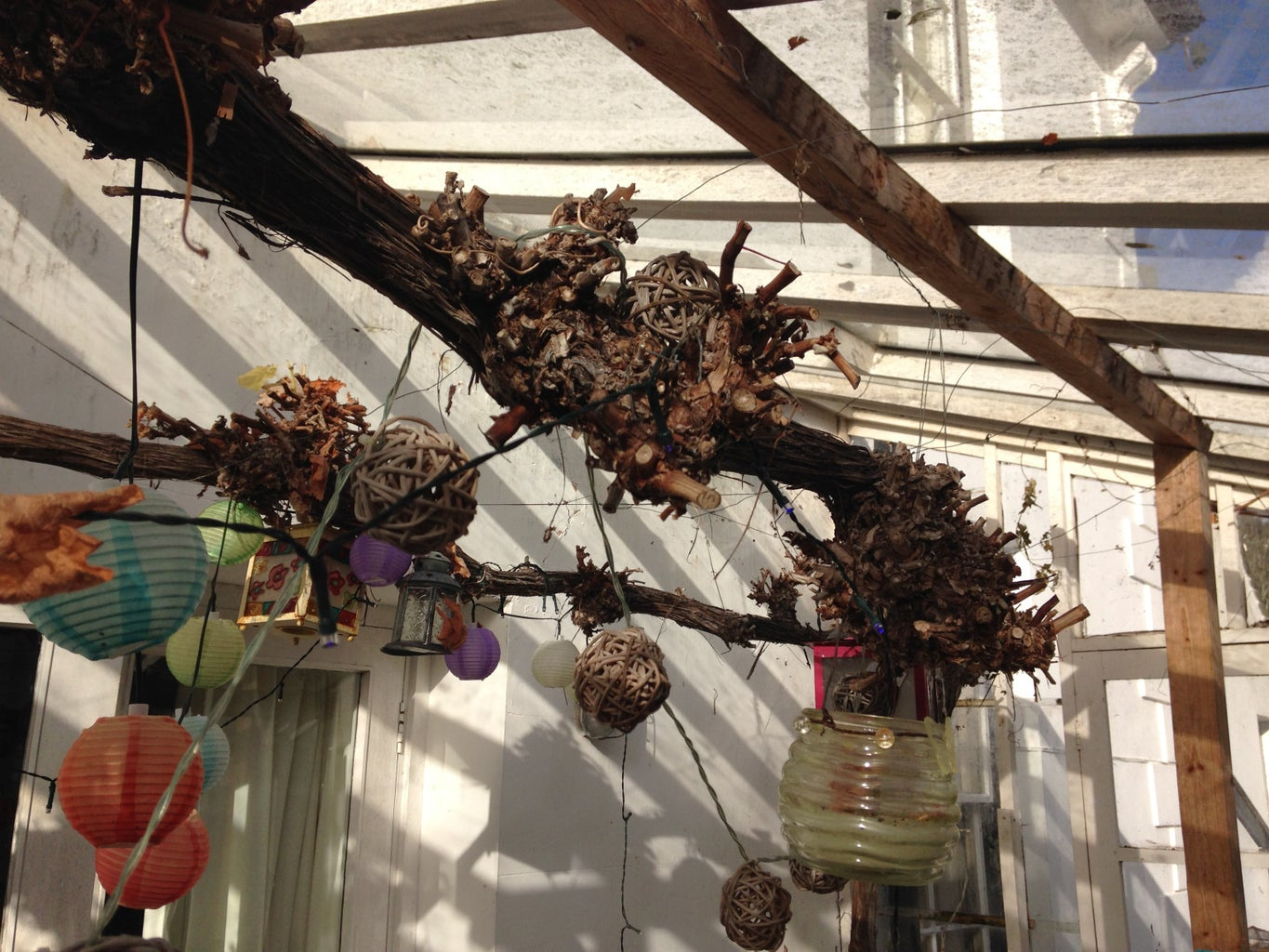The Trimmed Vine