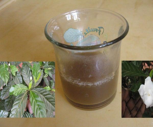 Crape Jasmine Leaf Decoction to Control Hypertension