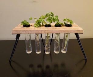 植物传播者