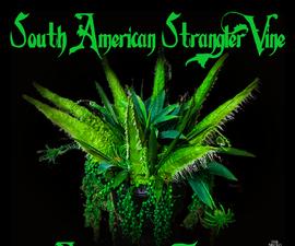 Animatronic Tentacle Vine - AKA Cleopatra, the Rare South American Strangler Vine