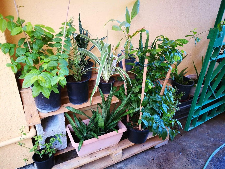 DIY Outdoor Pallet Plant Shelf