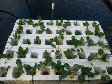 Spinach Raft