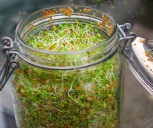 36 Cool Indoor Garden Ideas to Grow Food