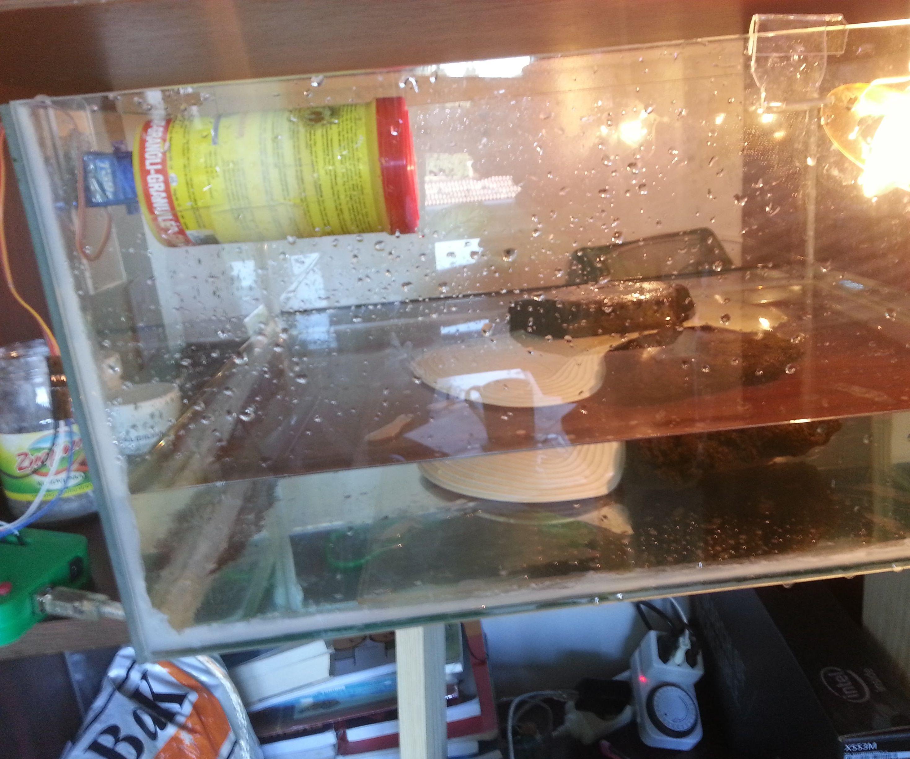Auto turtle/fish feeder