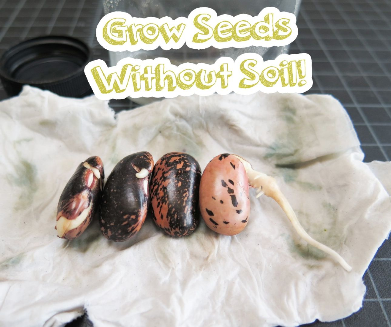 Grow Seeds Without Soil!