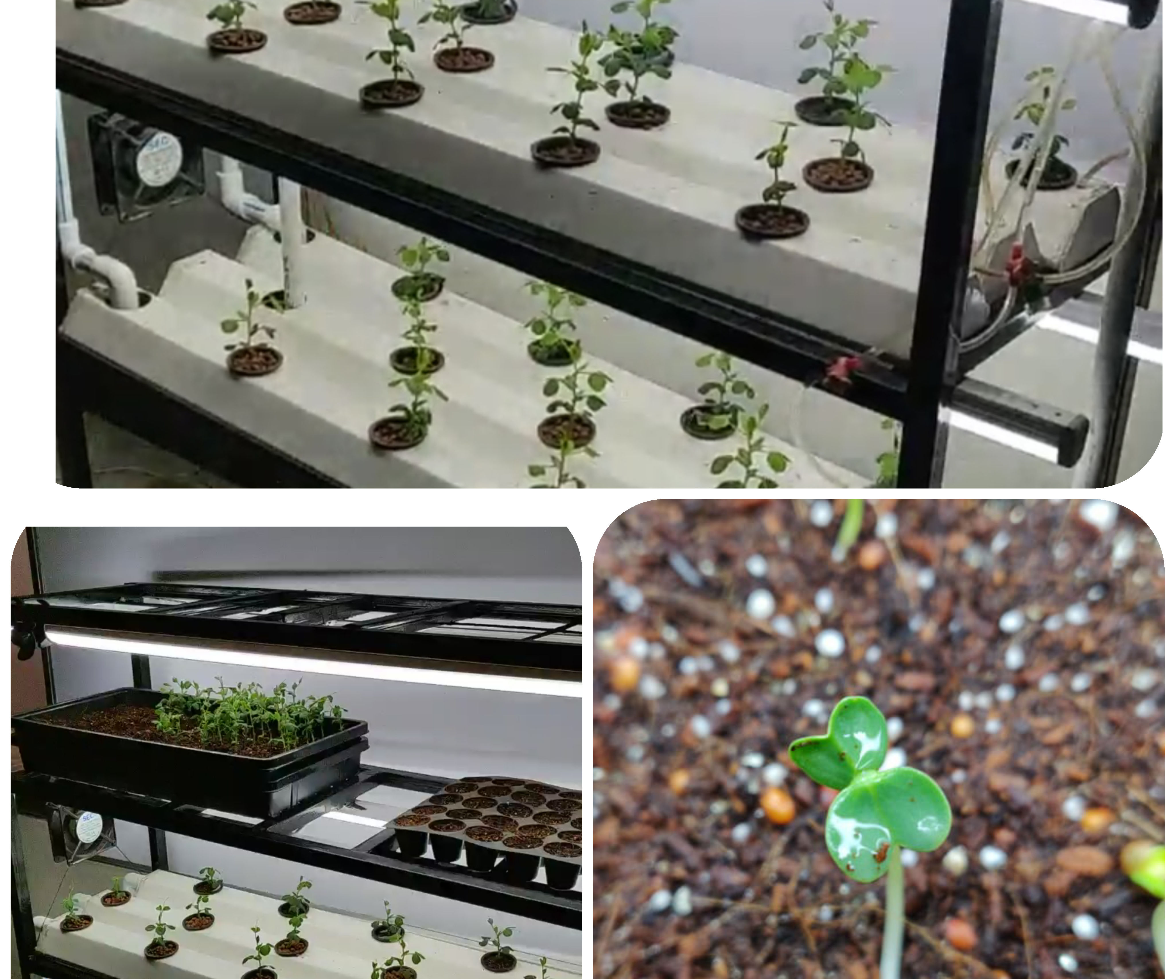 INDOOR HYDROPONIC VEGETABLE GROWING SYSTEM