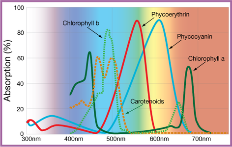 Light-Spectrum Requirements