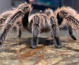 蜘蛛粘的能力而不是卡住
