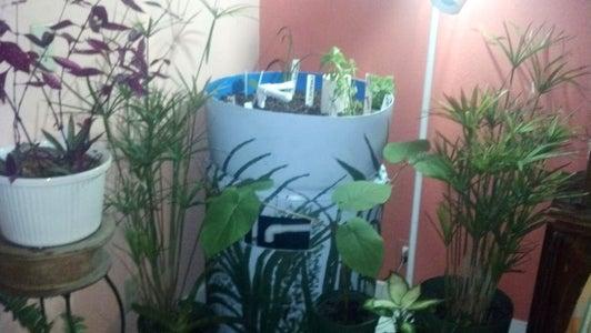 Barrelponics - Getting Started With Aquaponics