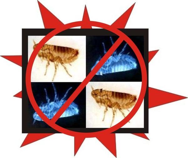 Controlar Pulgas Naturalmente Com Comum Utensílios Domésticos