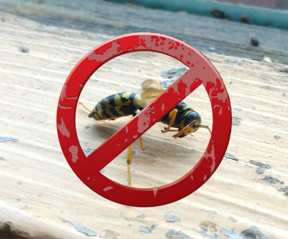 Prevent Bee & Wasp Stings (Easiest Life Hack!)