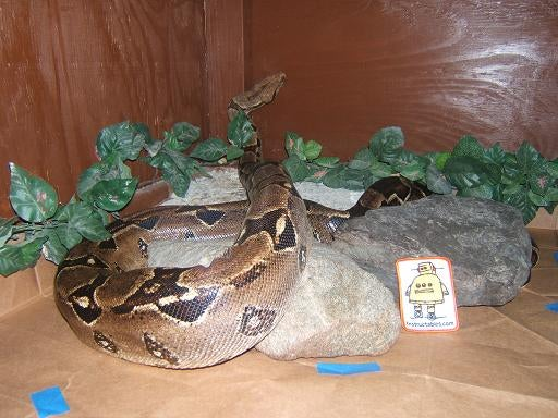 Reptile Tank Heating and Lighting Guide