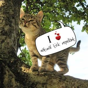 Natural Tick Repellent for Cats