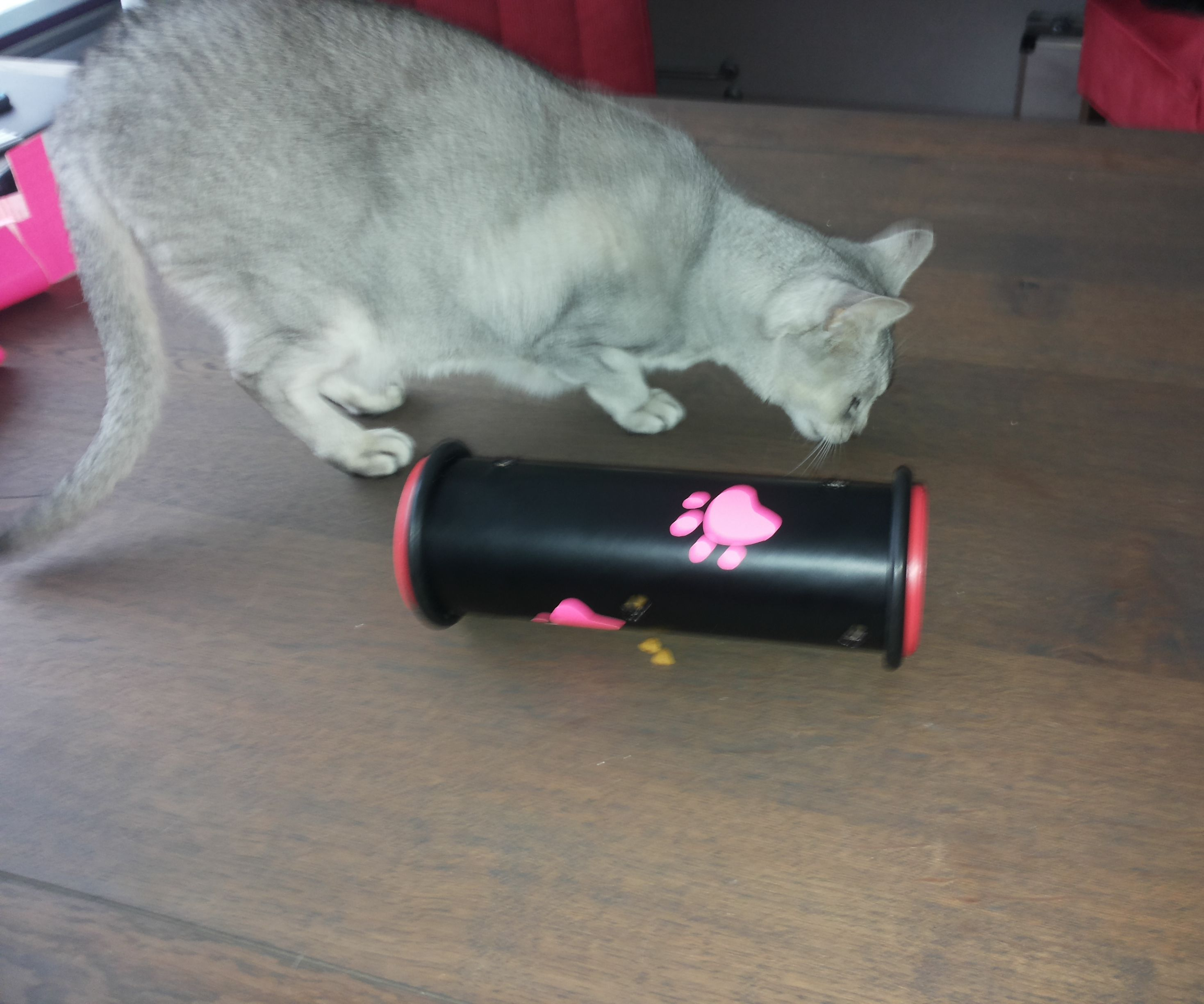 Cat toy Kitty Codex (other pets will love it too!)