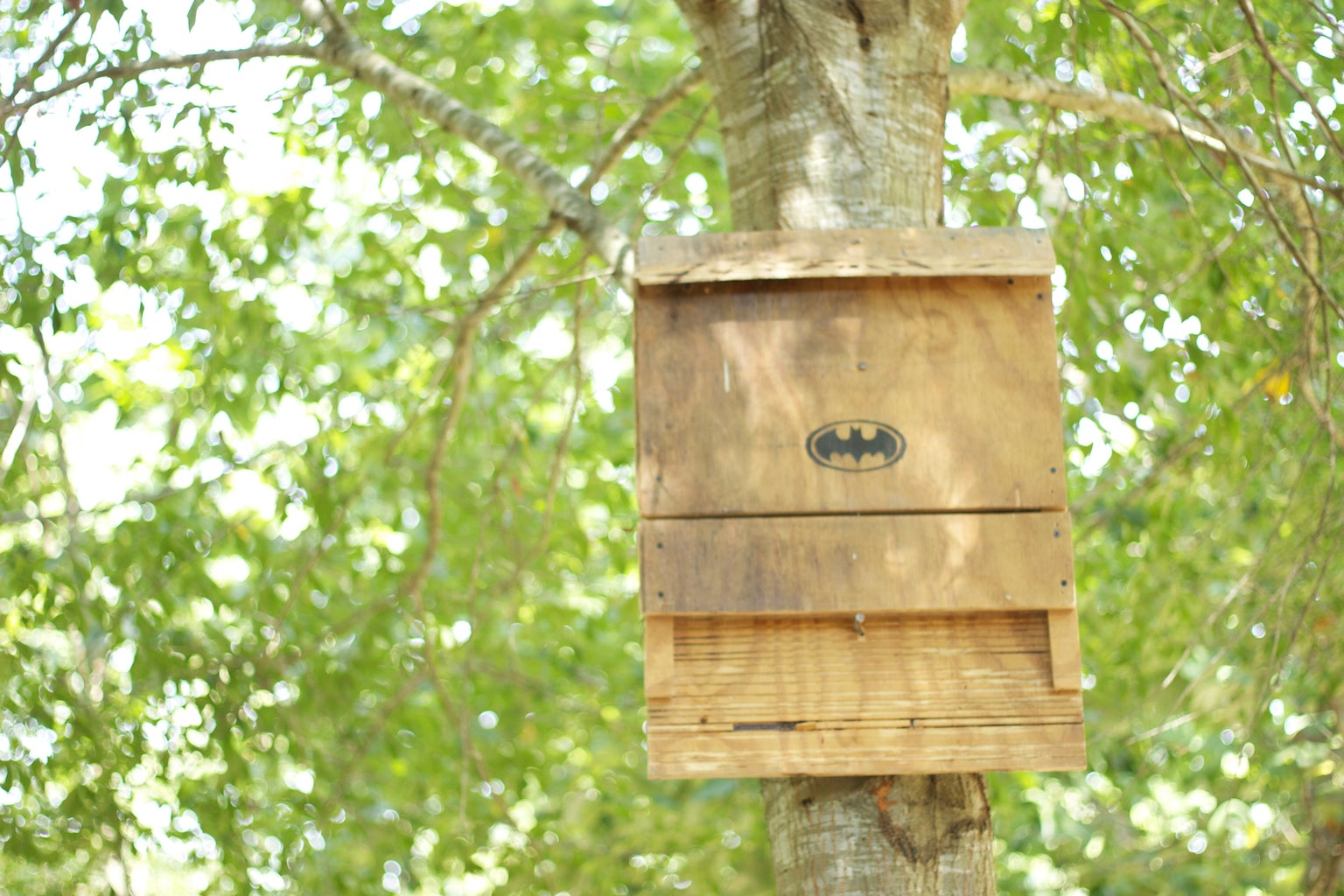 The Bat House: a Green, Energy Efficient Insect Repellant
