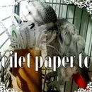 Recycled toilet paper rolls into super easy parrot toy