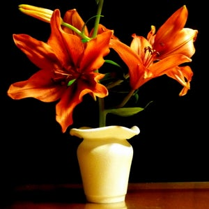 Designer Vases From Used Coffee Cups