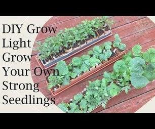 DIY生长,种植强大的幼苗