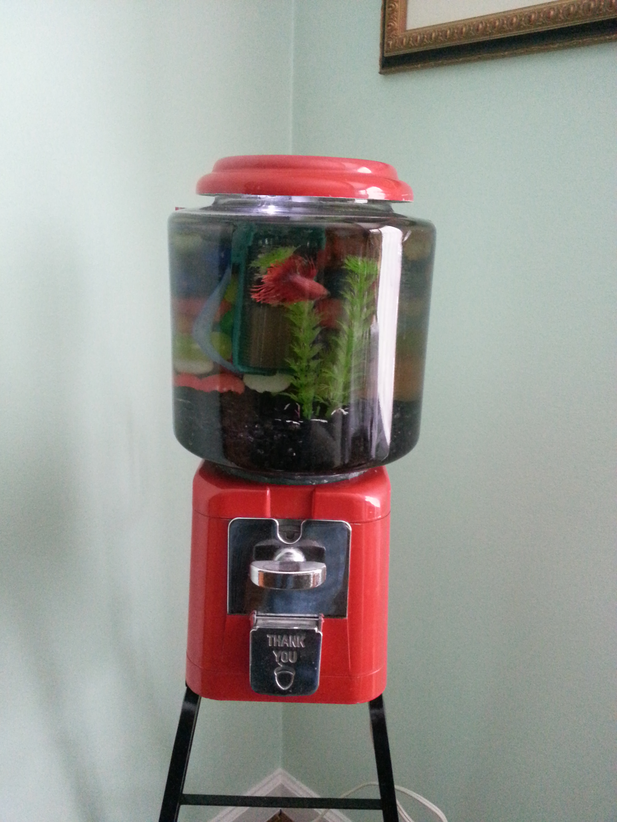 Gumball Machine Fish Tank