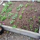 Make A New Garden!!!!