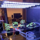 Indoor Planter Machine