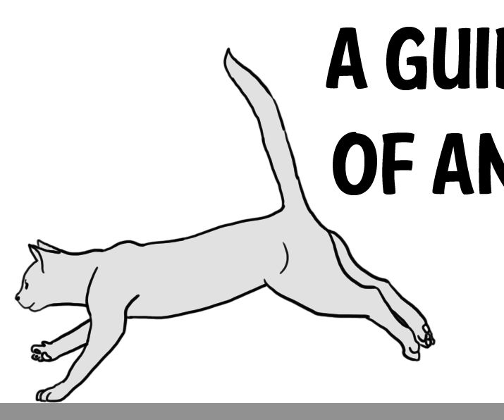 A Guide to the Basics of Animal Animation