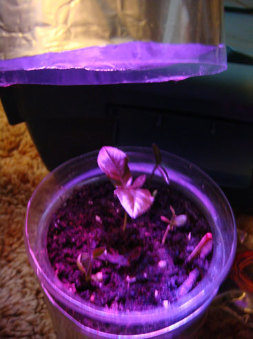 LED Grow Light using Joule Thief Battery Power in a Wick Gardening Container for CHEAP!
