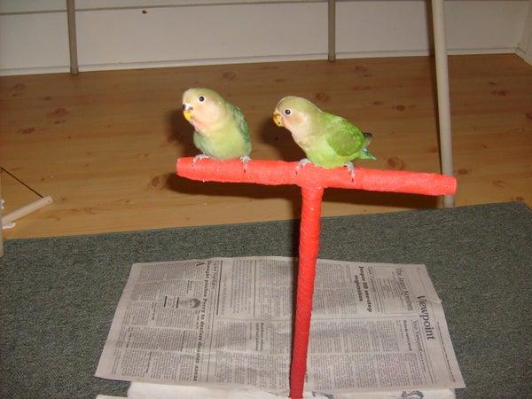 T-Shaped Bird Training Stand