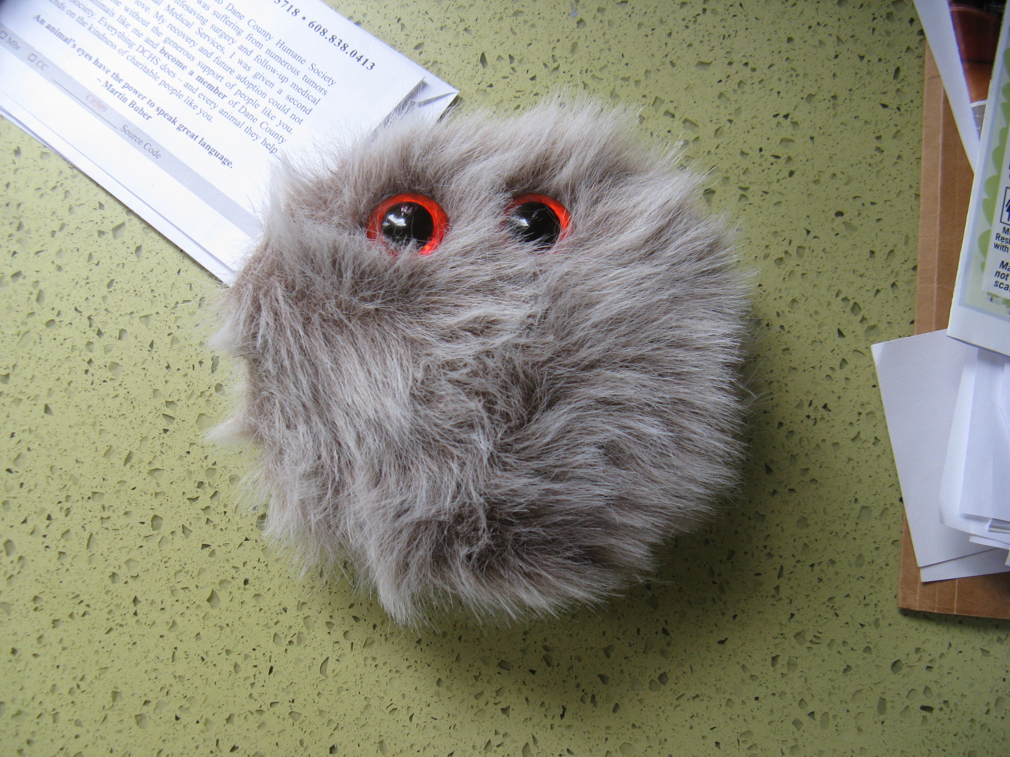 The Fuzzmeister: A Small, Furry Friend