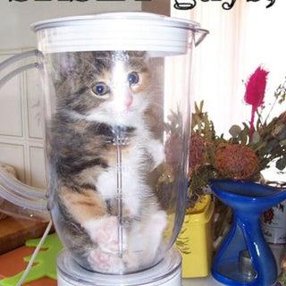 srsly cat.jpg