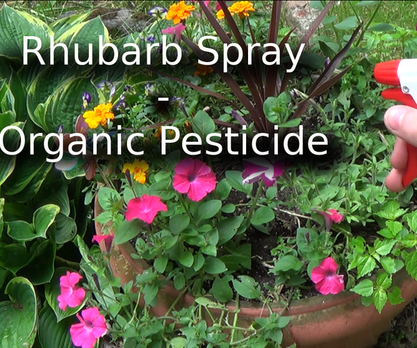 Rhubarb Spray - Organic Pesticide