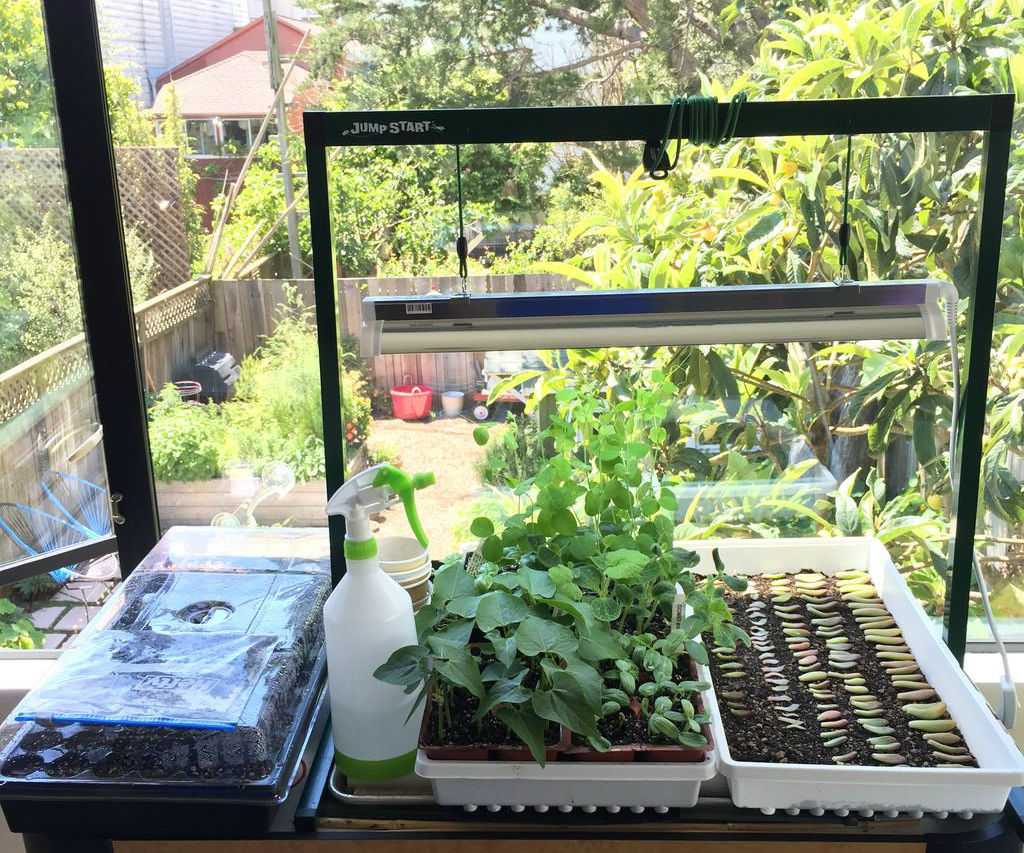 Urban Farming: Indoor Starter Plants from Seed
