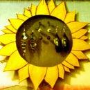 Sunflower Earring Display