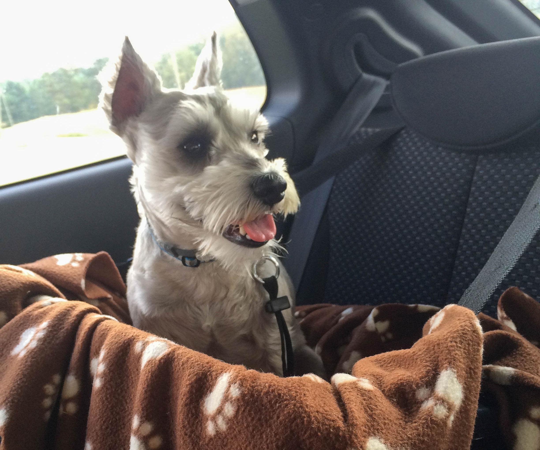 Cheap Safe Dog Car Seat