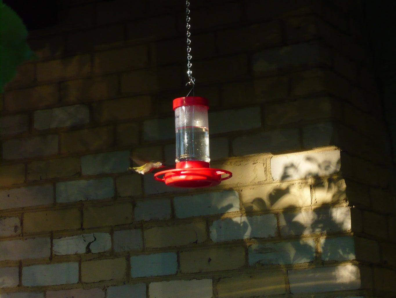 Inexpensive Hummingbird Feeder Fix