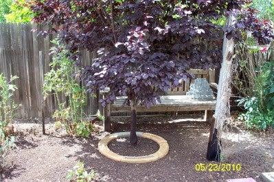 Place Ring Around Tree