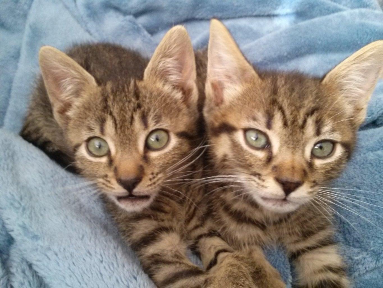 Caring for Orphaned Kittens