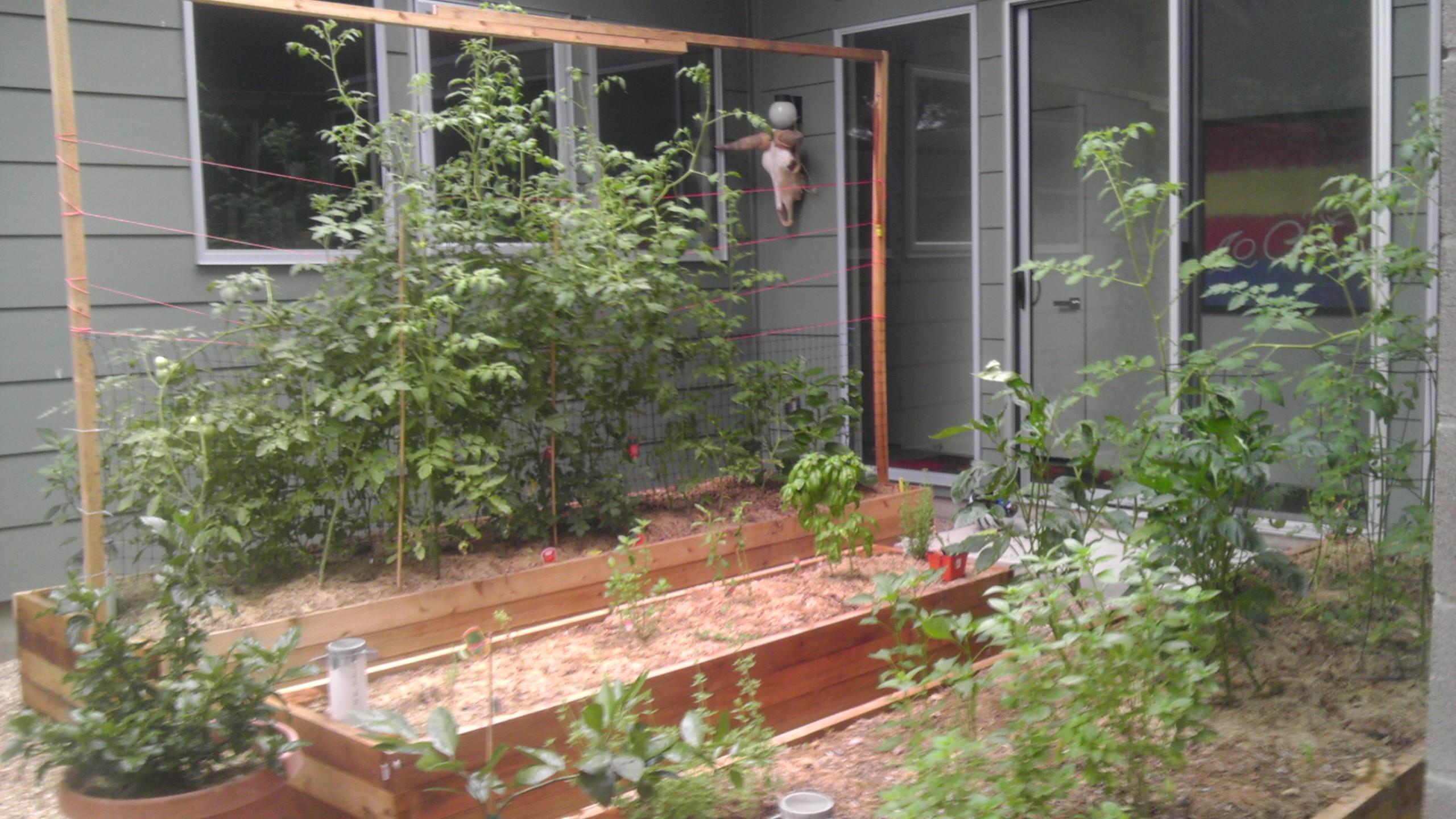 Austin Texas wicking bed raised garden