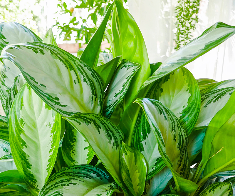 How I Feed My Houseplants Naturally With Worm Compost & Compost