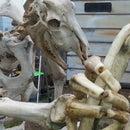 bone sculptures