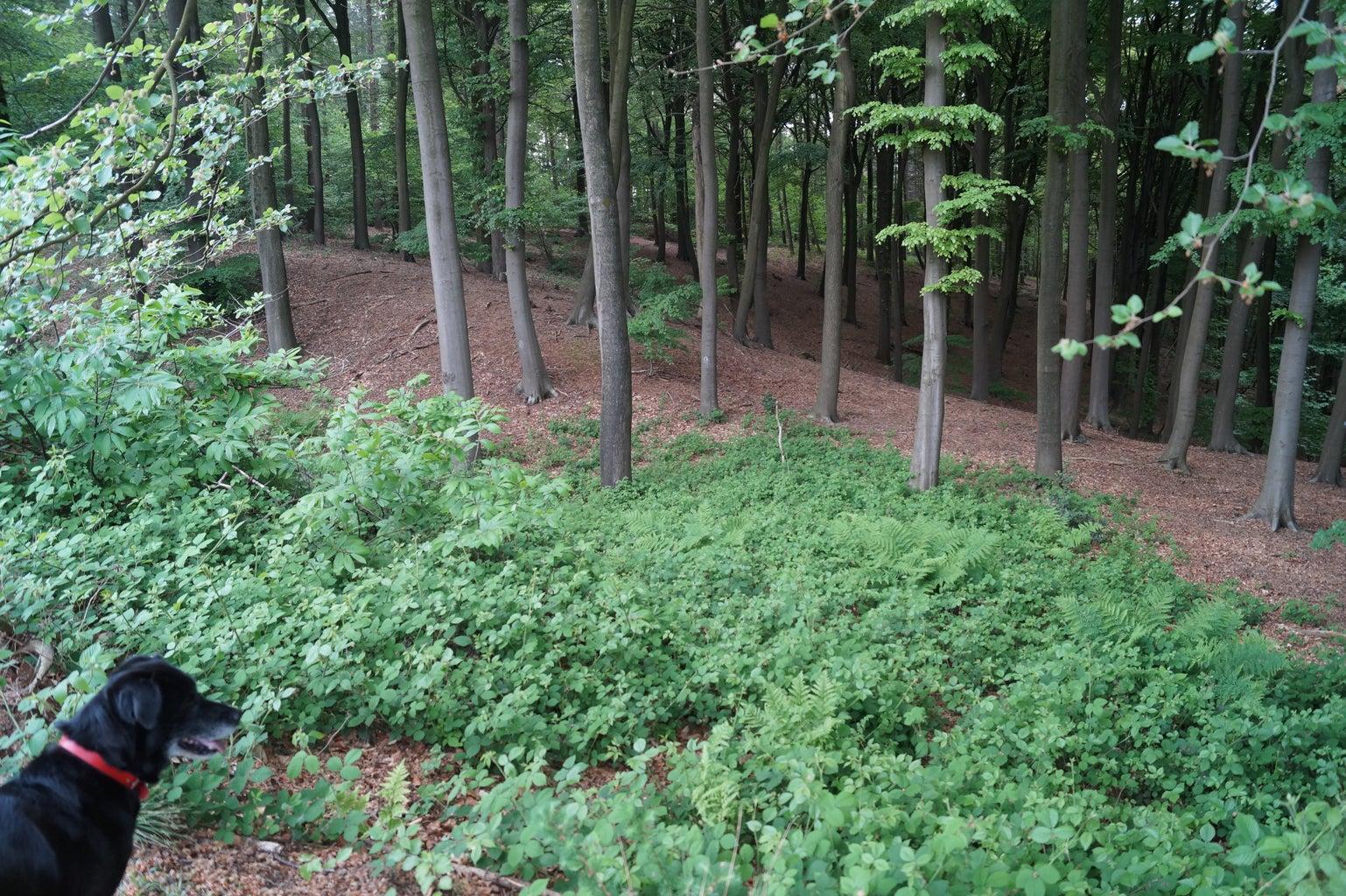 Tussentijdse Field Research Naar Elementen Uit Het Bos