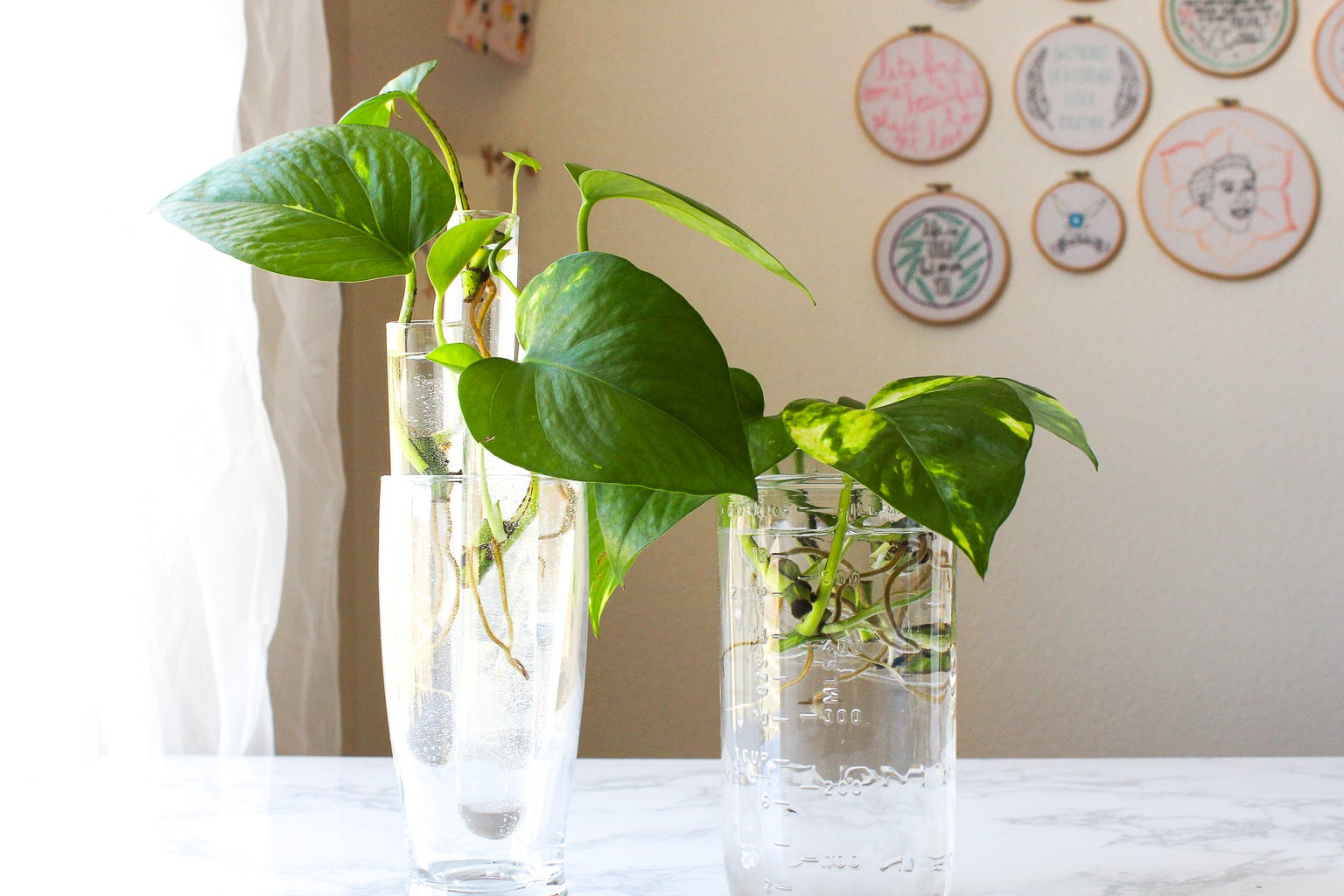 How to Grow a Pothos Plant in Water