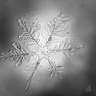 Snowflake_B&W.JPG