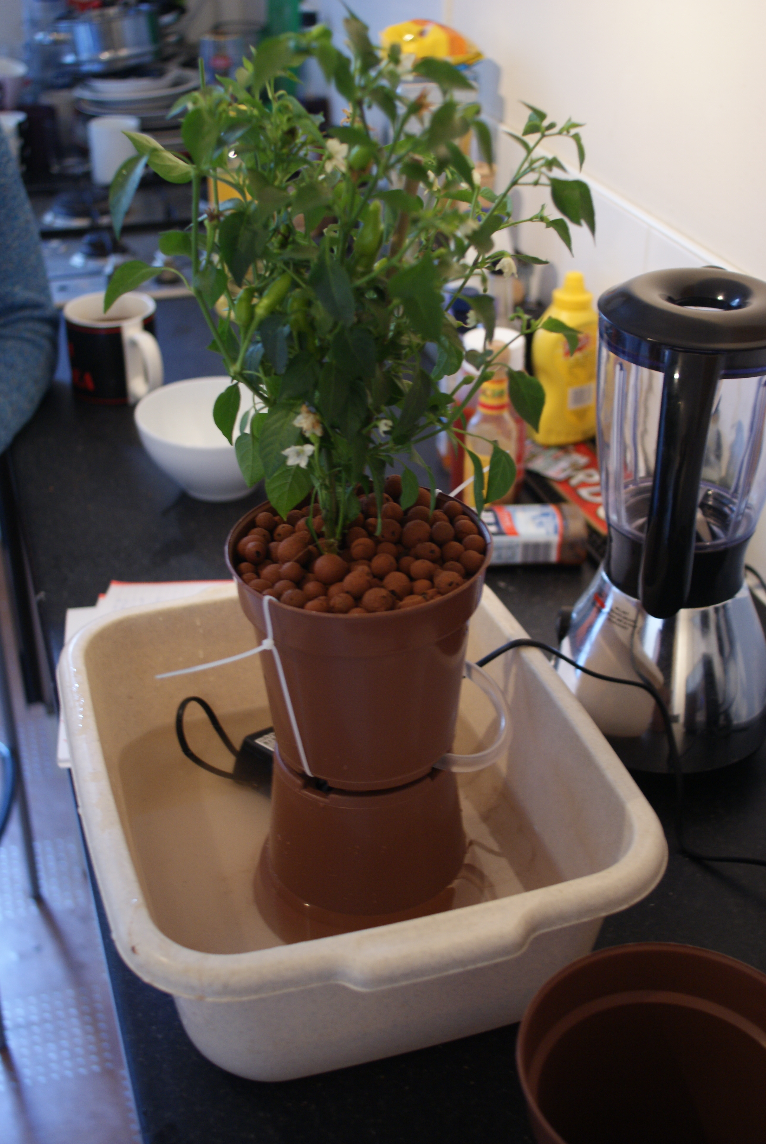Hydroponic Drip Growing Starter Kit (featuring Chillies)