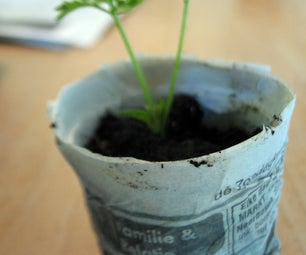 Newspaper Planting Pots; My Version.