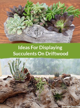 Ideas For Displaying Succulents On Driftwood 9 Steps With Pictures Instructables
