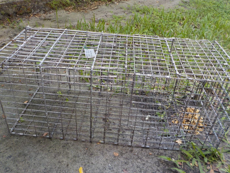 Effective Raccoon Traps