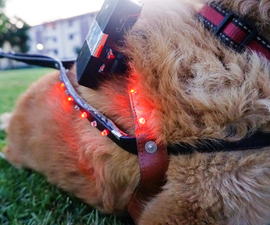 LED Distance Indicator Dog Harness