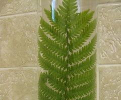 Hosta Leaf or Fern Frond Display